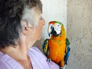 Gypsy the macaw