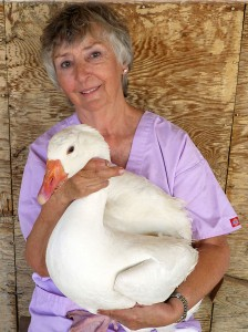 Darlene Braastad with goose.