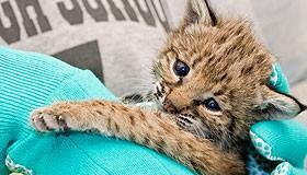 Why Wildlife Rehabilitation?